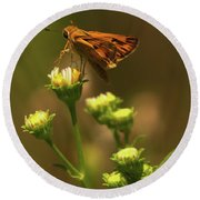 Moth Sitting On Yellow Flower Round Beach Towel