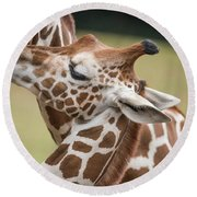 Mother And Baby Giraffes Round Beach Towel