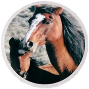 Mother And Colt Wild Round Beach Towel