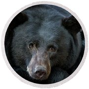 Round Beach Towel featuring the photograph Mother Bear by Mitch Shindelbower