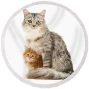 Mother Cat And Ginger Kitten Round Beach Towel