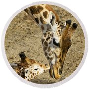 Mother Giraffe With Her Baby Round Beach Towel