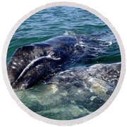 Mother Grey Whale And Baby Calf Round Beach Towel