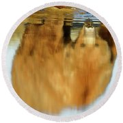 Mother Grizzly Reflection Round Beach Towel