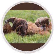 Mother Grizzly Suckling Twin Cubs Round Beach Towel