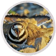 Mother Killdeer 1 Round Beach Towel