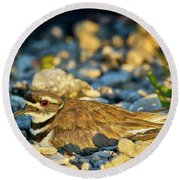 Mother Killdeer 2 Round Beach Towel
