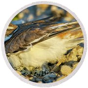 Mother Killdeer 3 Round Beach Towel