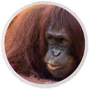 Mother Orangutan With Baby Round Beach Towel