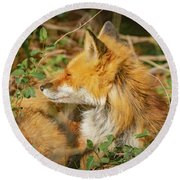 Mother Red Fox Resting Round Beach Towel