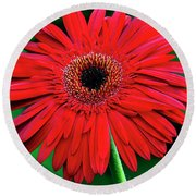 Mother's Day Gerbera Daisy Round Beach Towel