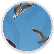 Round Beach Towel featuring the photograph Mouettes by Marc Philippe Joly