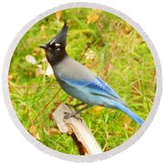 Mountain Blue Jay Round Beach Towel