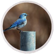 Mountain Bluebird Round Beach Towel by Eric Nielsen