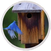 Mountain Bluebird Male Round Beach Towel
