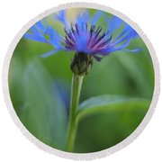 Mountain Bluet Flower Round Beach Towel