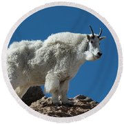 Round Beach Towel featuring the photograph Mountain Goat 2 by Gary Lengyel