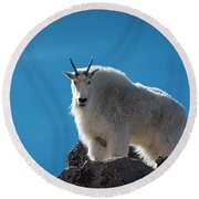 Round Beach Towel featuring the photograph Mountain Goat 3 by Gary Lengyel