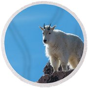 Round Beach Towel featuring the photograph Mountain Goat 4 by Gary Lengyel
