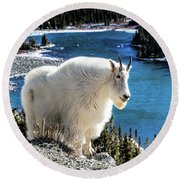 Mountain Goat At Lower Blue Lake Round Beach Towel