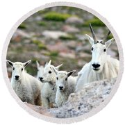 Round Beach Towel featuring the photograph Mountain Goat Family Panorama by Scott Mahon
