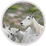 Round Beach Towel featuring the photograph Mountain Goat Family by Scott Mahon