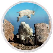 Mountain Goat Leap-frog Triptych Round Beach Towel