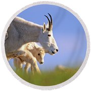 Round Beach Towel featuring the photograph Mountain Goat Light by Scott Mahon