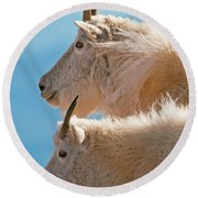 Round Beach Towel featuring the photograph Mountain Goats by Gary Lengyel