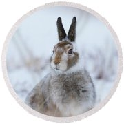 Mountain Hare - Scotland Round Beach Towel