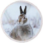 Mountain Hare - Scotland Round Beach Towel