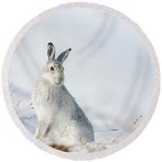 Mountain Hare Sitting In Snow Round Beach Towel