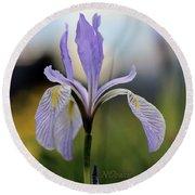 Mountain Iris With Bud Round Beach Towel