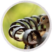 Round Beach Towel featuring the photograph Mourning Dove In A Flower Planter by Debbie Oppermann