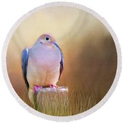 Mourning Dove Painted Portrait Round Beach Towel