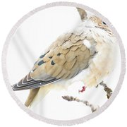 Mourning Dove, Snowy Morning Round Beach Towel by A Gurmankin