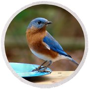 Round Beach Towel featuring the photograph Mr Bluebird by Sue Melvin