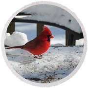 Mr. Cardinal Round Beach Towel by Melissa Messick