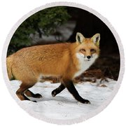 Round Beach Towel featuring the photograph Mr Fox by Mircea Costina Photography