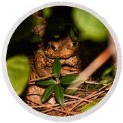 Mr Frog Round Beach Towel by Alessandro Della Pietra