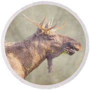 Round Beach Towel featuring the photograph Mr Moose by Roy McPeak