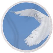 Mr Snowy Owl Round Beach Towel by Mircea Costina Photography