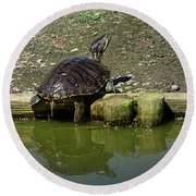 Mr. Turtle Round Beach Towel by Melissa Messick