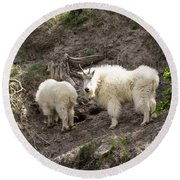 Mt Goat Outing Round Beach Towel