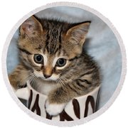 Mug Kitten Round Beach Towel