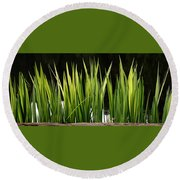 Round Beach Towel featuring the photograph Mug - Spring Reeds by Inge Riis McDonald