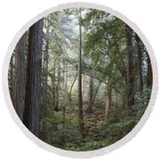 Round Beach Towel featuring the photograph Muir Woods Tranquility by Sandra Bronstein
