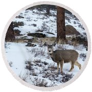 Mule Deer - 8922 Round Beach Towel