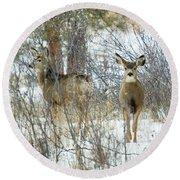 Mule Deer Does In Snow Round Beach Towel