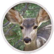 Mule Deer Round Beach Towel